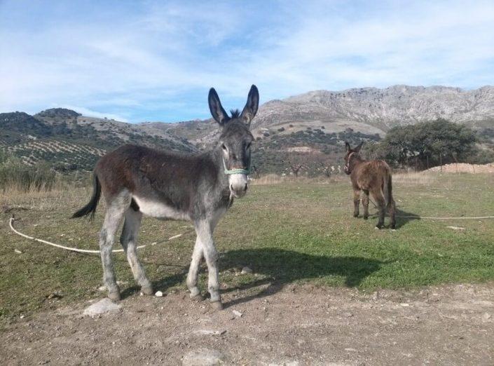 Cortijo El Llano en Andalucía